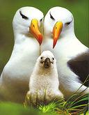 Детеныши животных. Самые лучшие фотографии — фото, картинка — 1